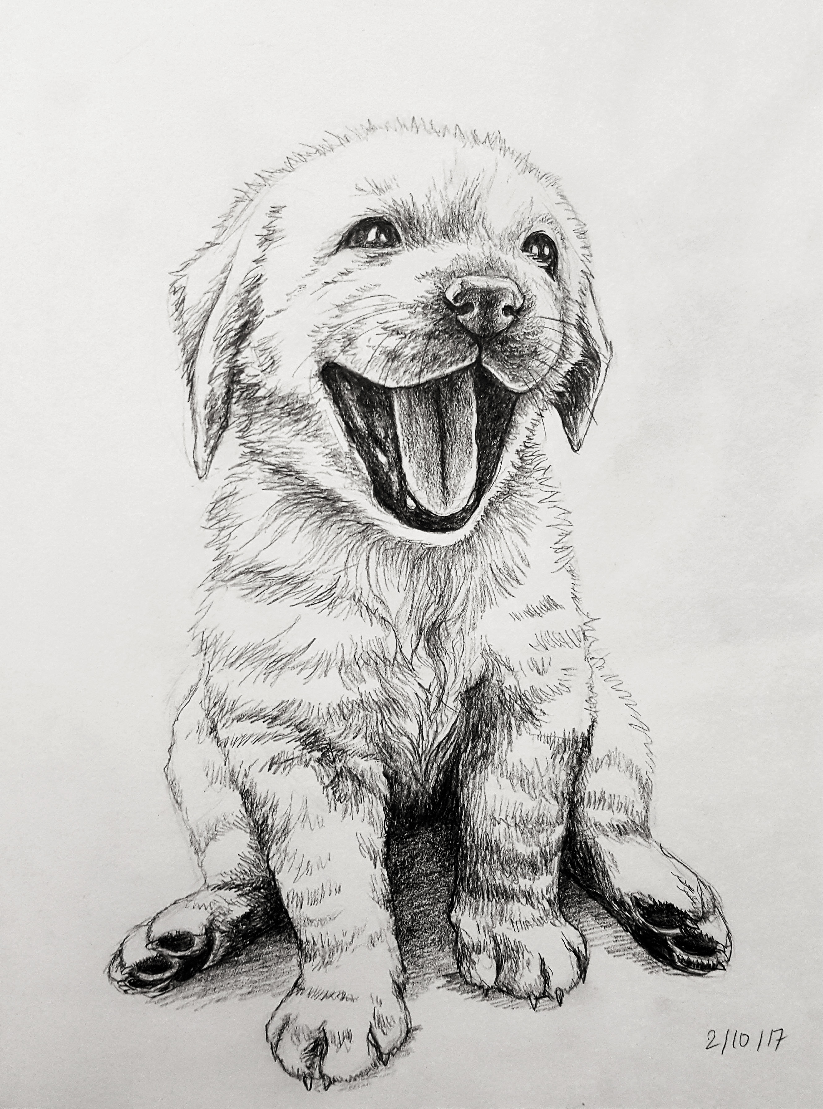 Pet Commissions Examples And Pricing Kattakind Art